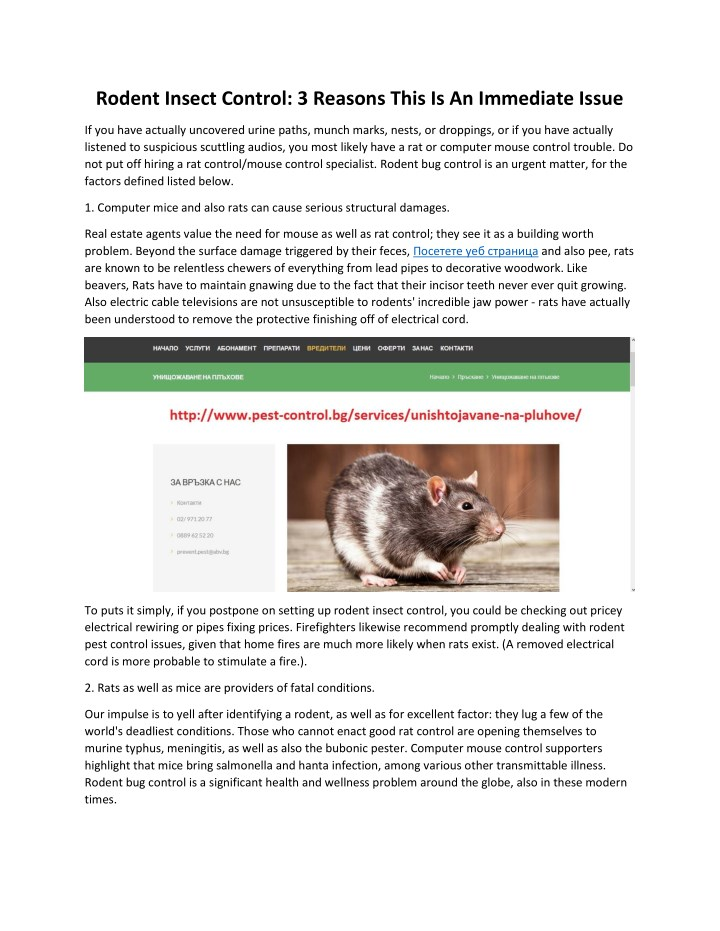 rodent insect control 3 reasons this n.