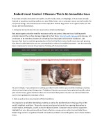 rodent insect control 3 reasons this