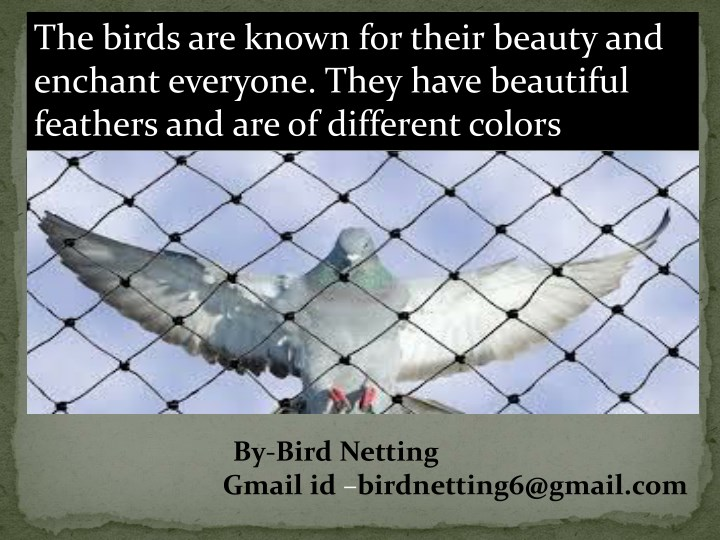 the birds are known for their beauty and enchant n.