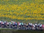 the peloton in action during stage 16 reuters