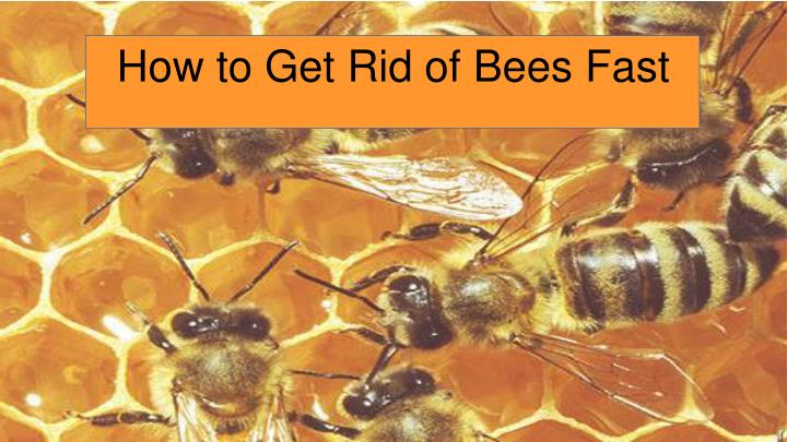 how to get rid of bees fast n.