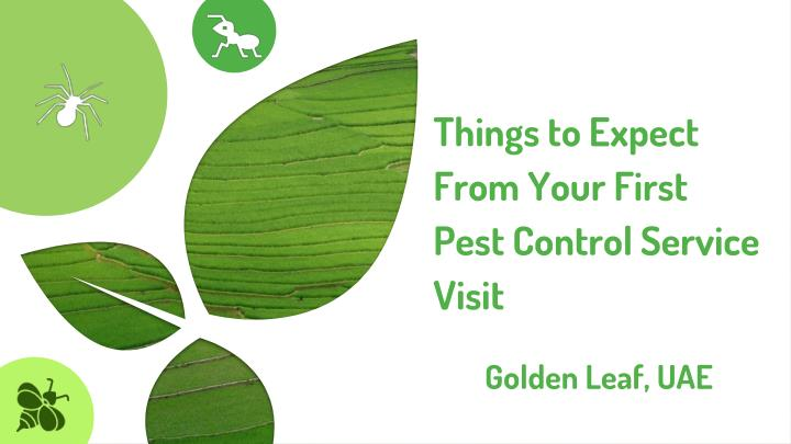 things to expect from your first pest control service visit n.