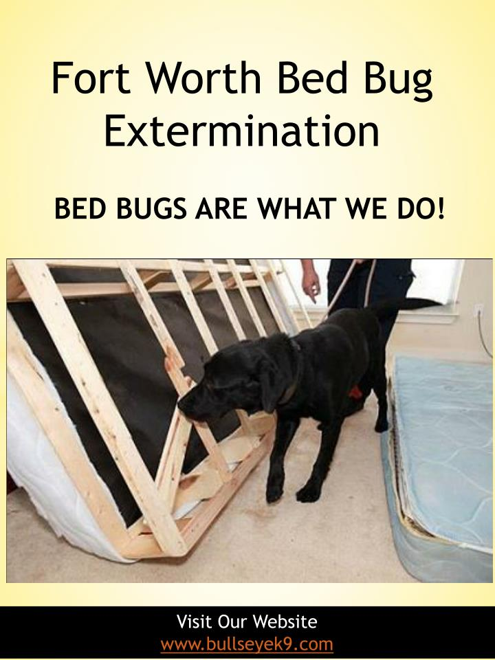 fort worth bed bug extermination n.