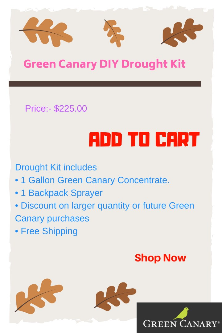 green canary diy drought kit n.
