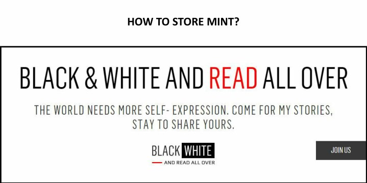 how to store mint n.