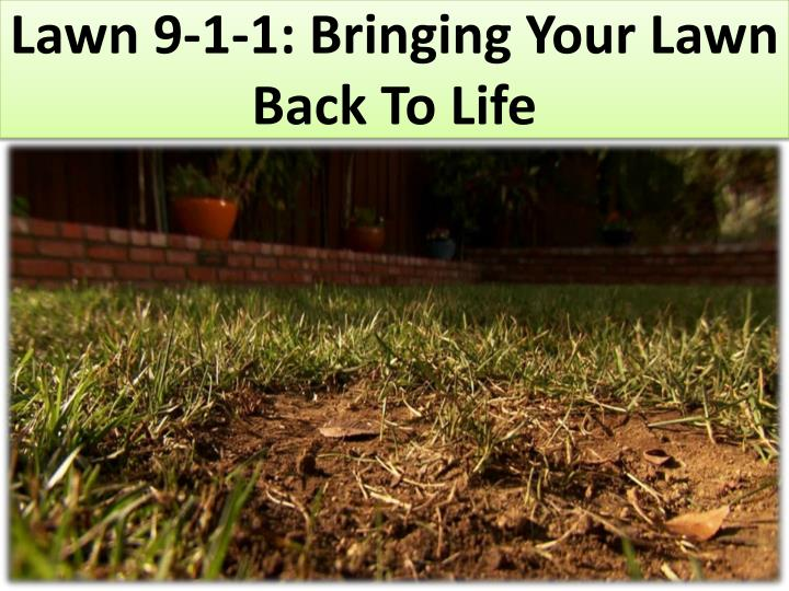 lawn 9 1 1 bringing your lawn back to life n.