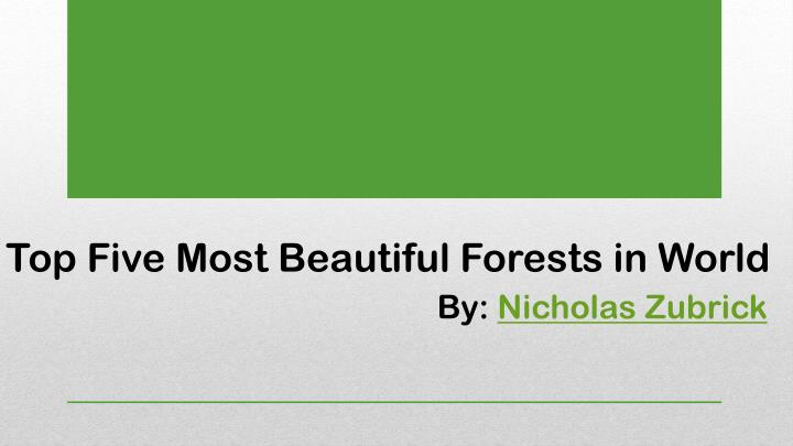 top five most beautiful forests in world n.