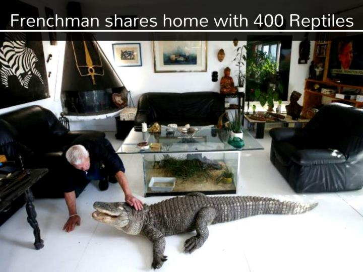 frenchman shares home with 400 reptiles n.
