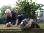 gillet gives a banana to his iguana in his garden