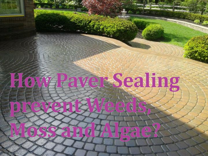 how paver sealing prevent weeds moss and algae n.