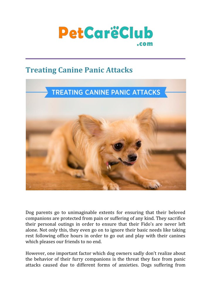 treating canine panic attacks n.