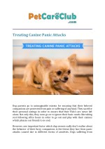 treating canine panic attacks