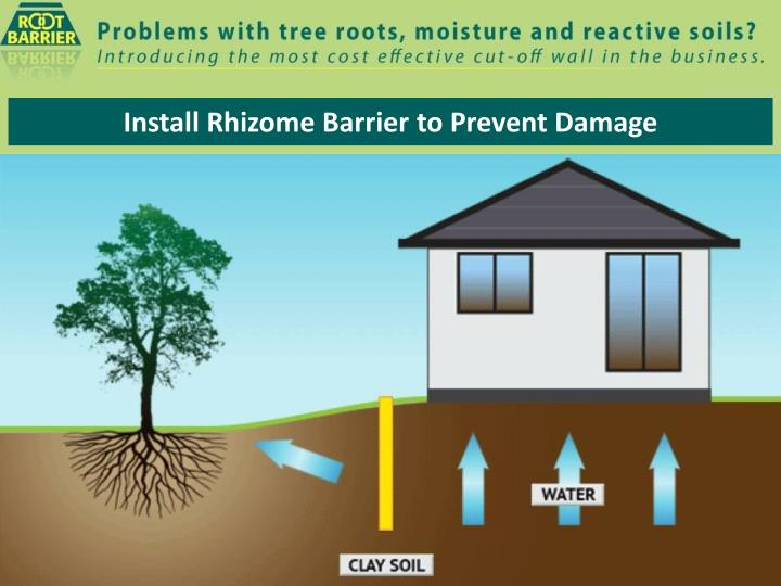 install rhizome barrier to prevent damage n.
