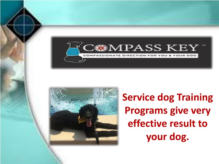 service dog training programs give very effective n.