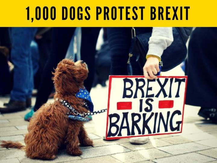 1 000 dogs protest brexit n.