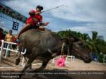 a jockey competes in chonburi s annual buffalo