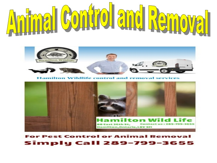 animal control and removal n.