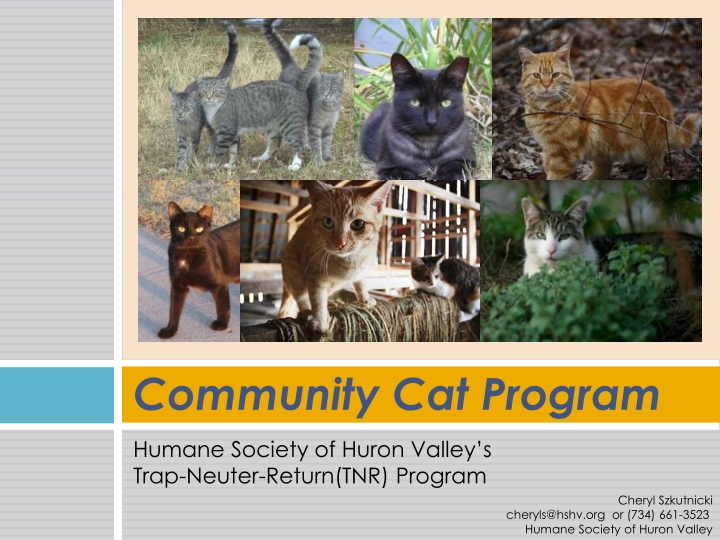 community cat program n.
