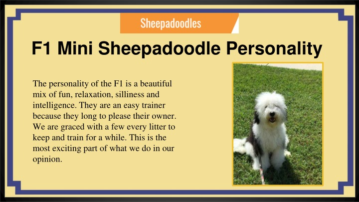 PPT - Sheepadoodle Puppies for Sale Eckert,CO   Open Range Pups