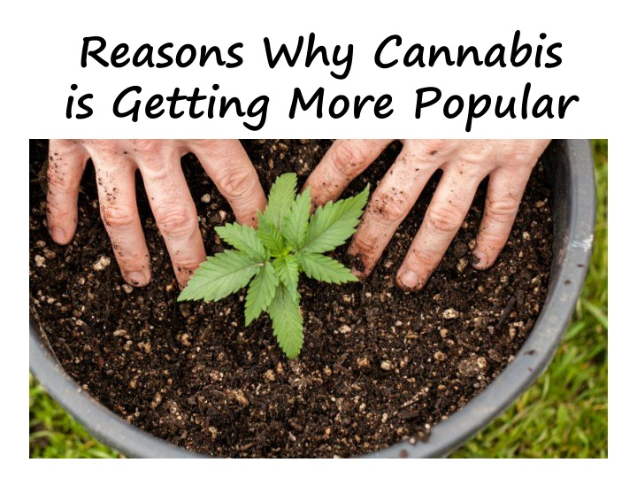 reasons why cannabis i s getting more popular n.