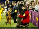 a trainer hugs her dog as they compete
