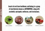 insects do not have backbones and belong