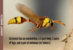 l 1 i 0 l an insect has an exeskeleton a 3 part