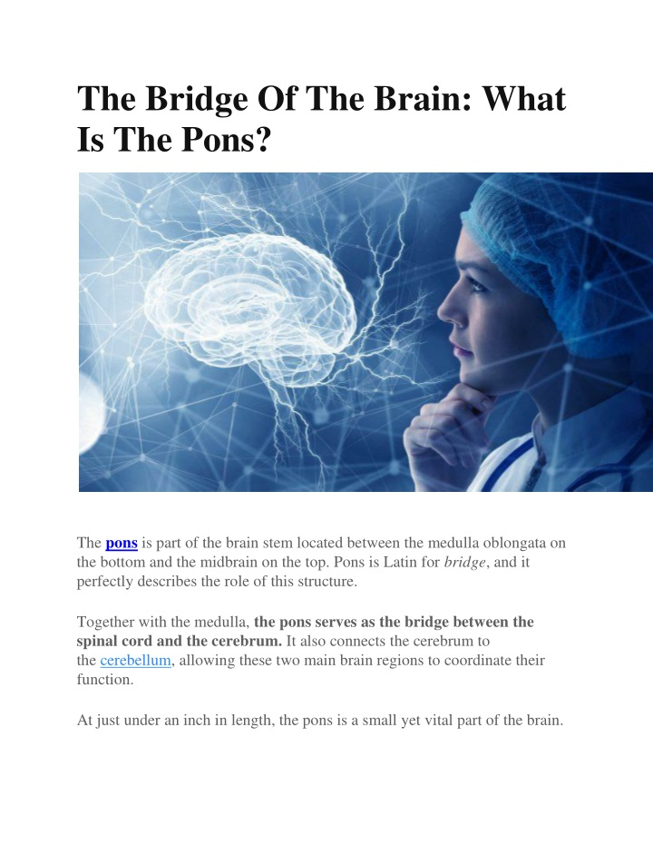 the bridge of the brain what is the pons n.
