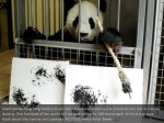 giant panda yang yang holds a brush behind