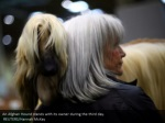 an afghan hound stands with its owner during