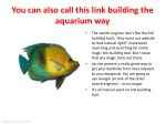 you can also call this link building the aquarium