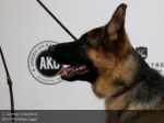 2 german shepherd reuters mike segar