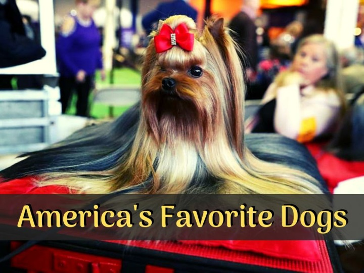 america s favorite dogs n.