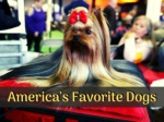 america s favorite dogs