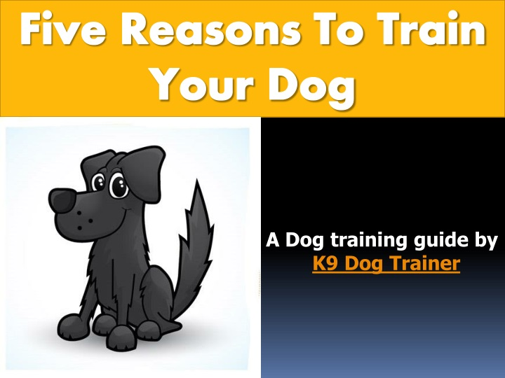 five reasons to train your dog n.