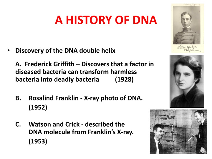 a history of dna n.