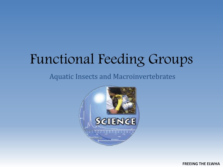 functional feeding groups n.