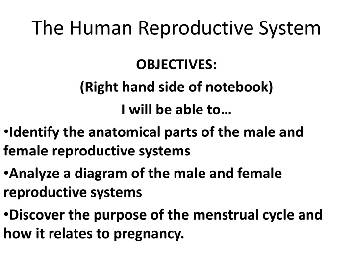 the human reproductive system n.