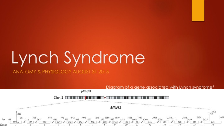 lynch syndrome n.