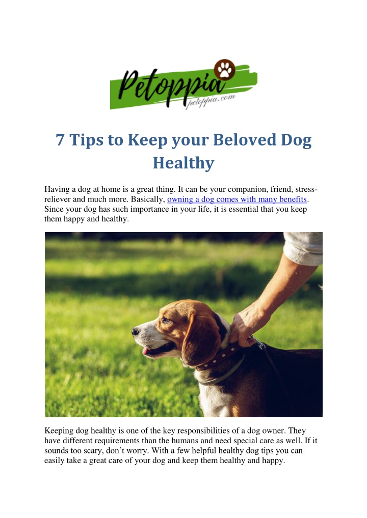 7 tips to keep your beloved dog healthy n.