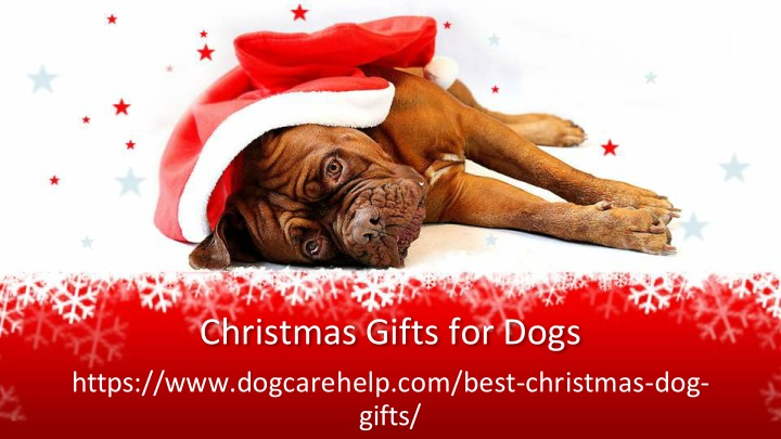 christmas gifts for dogs n.