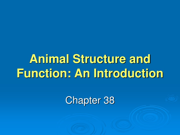 animal structure and function an introduction n.
