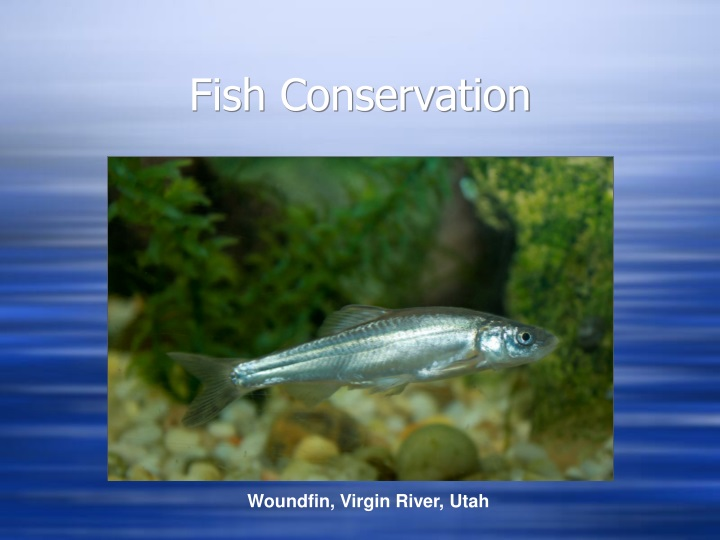 fish conservation n.